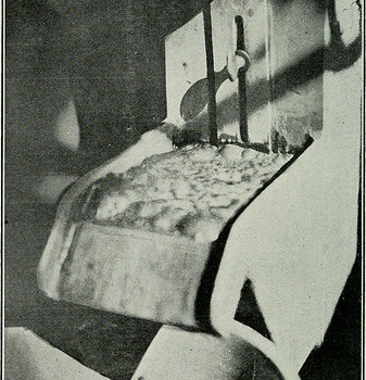 "Image from page 341 of ""Bulletin"" (1905)"