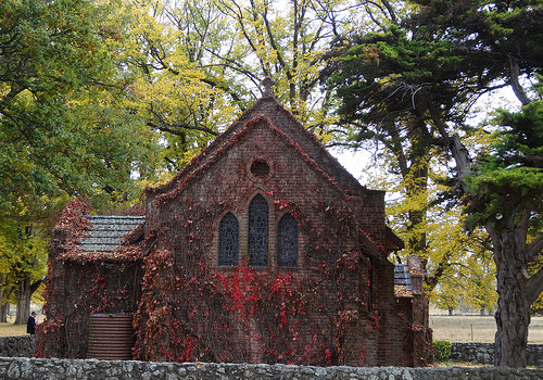 Red leaves of Virginina Creeper over the Gostwyck station Anglican Chapel constructed in 1922 near Uralla New South Wales.